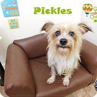 Adopt A Pet :: Pickles - Arcadia, FL