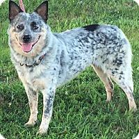 Adopt A Pet :: Elisa - Texico, IL
