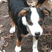 Adopt A Pet :: Lexy - Louisville, KY