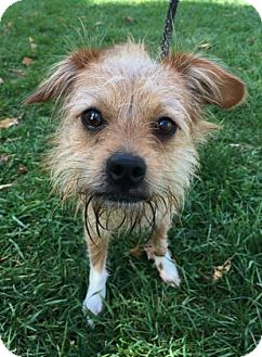 Terrier (Unknown Type, Small) Mix Dog for adoption in Binghamton, New York - Cooper