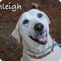 Adopt A Pet :: Ashleigh - Minneola, FL