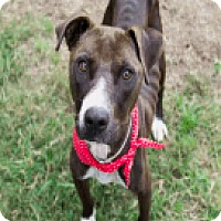 Adopt A Pet :: Gina - Fort Collins, CO
