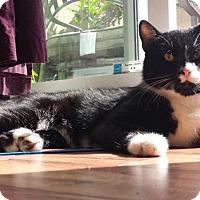 Adopt A Pet :: River - Vancouver, BC