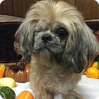 Adopt A Pet :: Jack - Tavares, FL