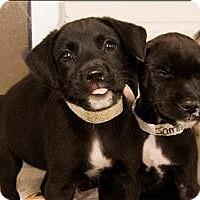 Adopt A Pet :: Janet - Birmingham, AL