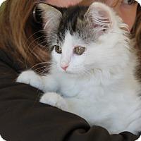 Adopt A Pet :: Jasmine - Naperville, IL