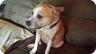 Terrier (Unknown Type, Medium) Mix Dog for adoption in Richmond, Virginia - CARAMEL