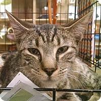Adopt A Pet :: *Sonny - Pembroke, GA