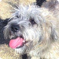 Adopt A Pet :: Benji - Godley, TX