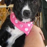 Adopt A Pet :: Baby Mandy - Marlton, NJ
