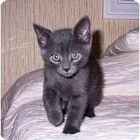 Adopt A Pet :: Shadow - Irvine, CA