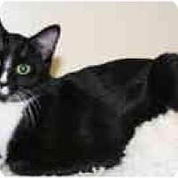 Adopt A Pet :: Lilu - Milwaukee, WI