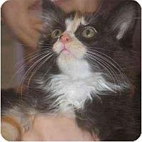 Adopt A Pet :: Bridget - Davis, CA