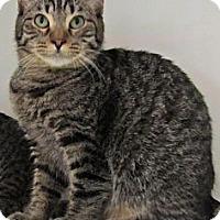 Adopt A Pet :: Harvey - Seminole, FL