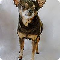 Adopt A Pet :: Stella (3.5 pounds) - Toluca Lake, CA