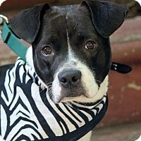Adopt A Pet :: Disney - Dalton, GA