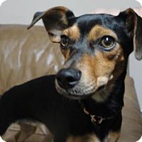 Adopt A Pet :: Jayce - Meridian, ID