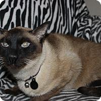 Adopt A Pet :: Silver - Secaucus, NJ