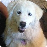 Adopt A Pet :: Lulu  *Adopted - Tulsa, OK
