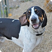 Adopt A Pet :: Ricon - Meridian, ID