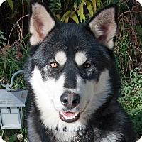 Adopt A Pet :: ZORRO - Boise, ID