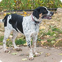 Adopt A Pet :: Tommy - Elmwood Park, NJ