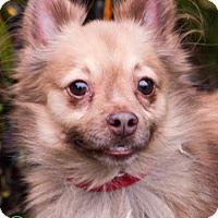 Adopt A Pet :: Rocket - Savannah, GA