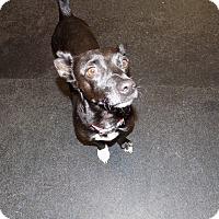 Adopt A Pet :: tux - Jupiter, FL