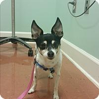 Adopt A Pet :: Mags - Homewood, AL