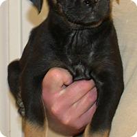 Adopt A Pet :: COOPER - Corona, CA