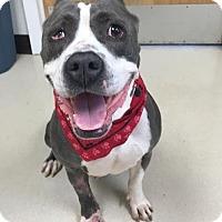 Adopt A Pet :: Shelly - Oak Ridge, NJ