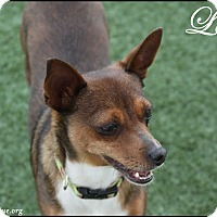 Adopt A Pet :: Lena - Rockwall, TX