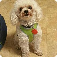 Adopt A Pet :: Prince - Minneapolis, MN