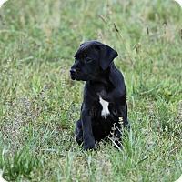 Adopt A Pet :: Stan - Good Hope, GA