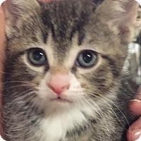 Adopt A Pet :: Misa - Ortonville, MI