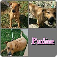 Adopt A Pet :: Pauline - Hudspeth County, TX