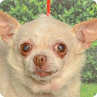 Adopt A Pet :: Minnie - Kalamazoo, MI