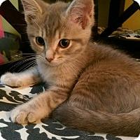 Adopt A Pet :: Neptune - Newport, KY