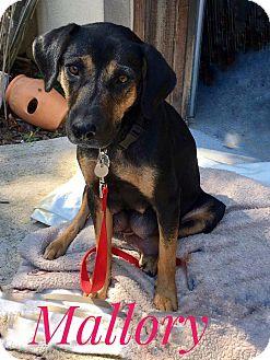 Terrier (Unknown Type, Medium) Mix Dog for adoption in Milton, Georgia - Mallory