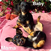 Adopt A Pet :: *Skipper pup and Mama* Video - Pasadena, CA