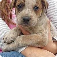 Adopt A Pet :: M Litter--arriving soon! - Chichester, NH