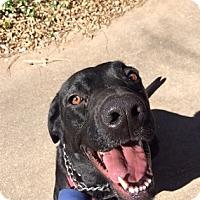 Adopt A Pet :: Pippa-Piper - Austin, TX