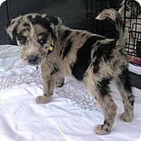 Adopt A Pet :: Jasper - Richmond, VA