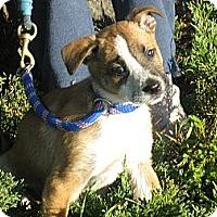 Adopt A Pet :: Cherry - Tumwater, WA