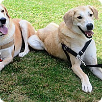 Adopt A Pet :: Echo and Bravo - Sneads Ferry, NC