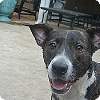 Plott Hound Mix Dog for adoption in Houston, Texas - Baxter