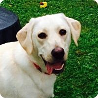 Adopt A Pet :: Suzy - Nanuet, NY