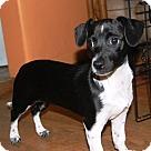 Adopt A Pet :: Eloise