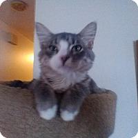 Adopt A Pet :: Grady - Fairborn, OH