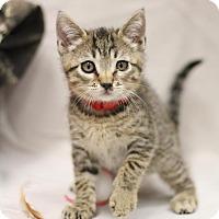 Adopt A Pet :: Freud - Sacramento, CA